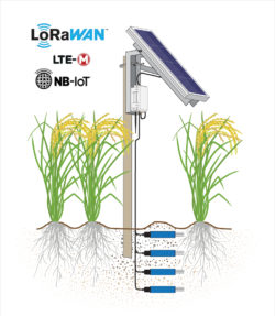 IoT Soil Moisture SNiP Solar Example With Rice