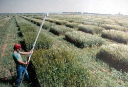 Cropscan in the field
