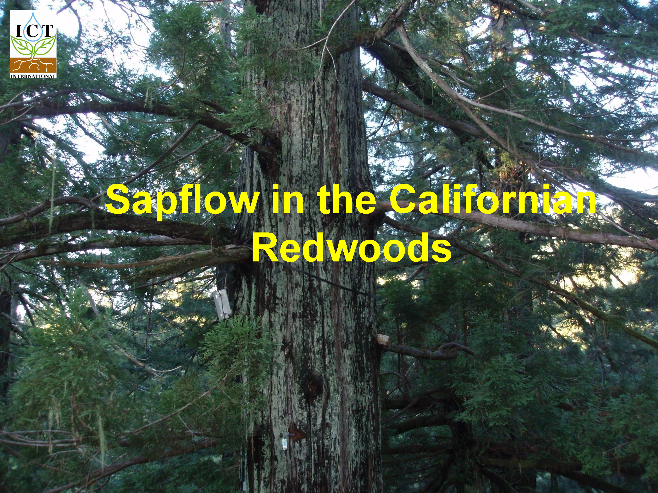 sapflow-redwoods_Page_02