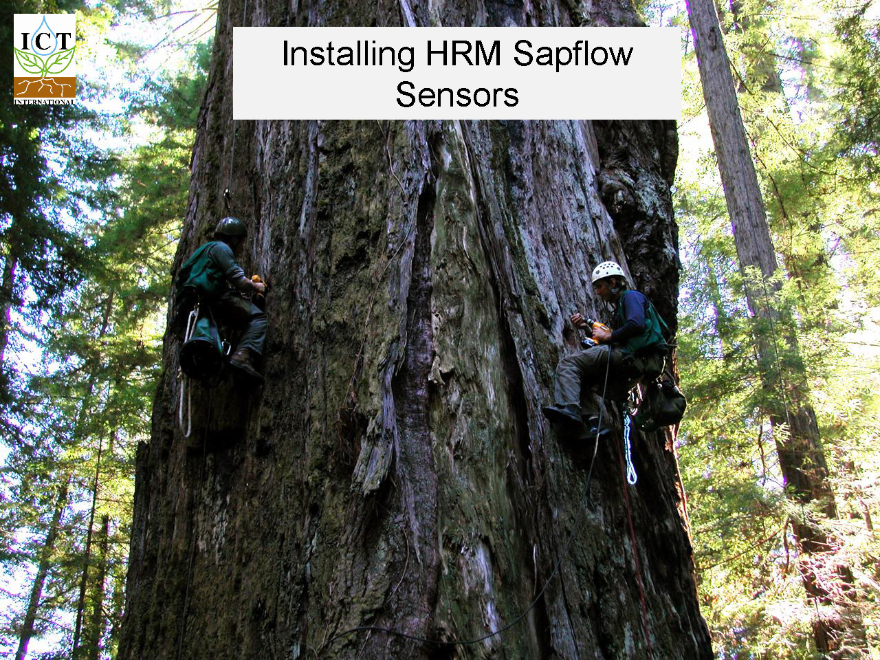 sapflow-redwoods_Page_09