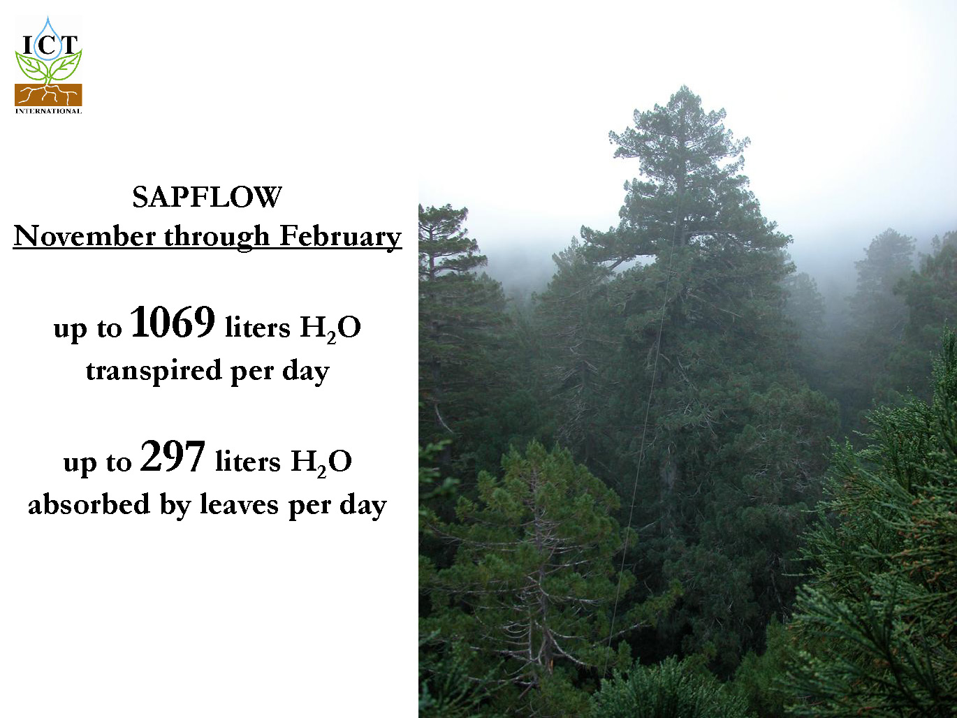 sapflow-redwoods_Page_01
