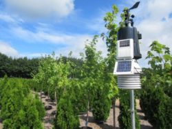 Irrigation Management Strategies for Nursery Trees