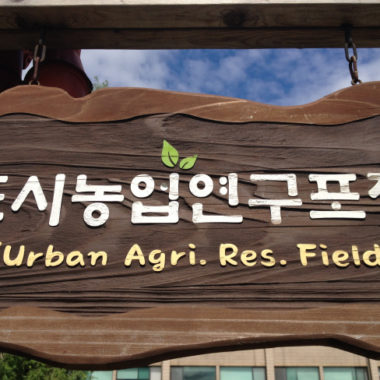 Green Roofs and Soil Moisture Monitoring in Korea