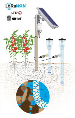 IoT Soil Water Potential SNiP Solar Example With Tomato