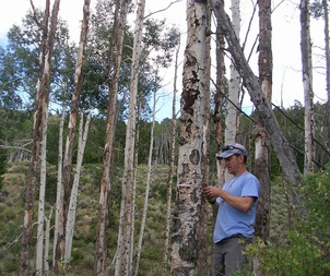 Satellite Images Related to Canopy Data Helps Predict Forest Response to Drought