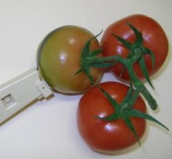 Cranston Fruit Gauge around Tomato