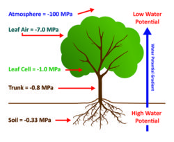SPAC Soil-Plant-Atmosphere Continuum