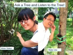 Benchmarking Ecosystem Health Trees As The Ultimate Integrator Of All Environmental Parameters