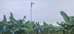 IoT connected sensors for monitoring Banana crop's use and runoff of Nitrate