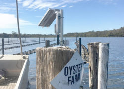 Oyster Farm making use of IoT sensors to maximise growth